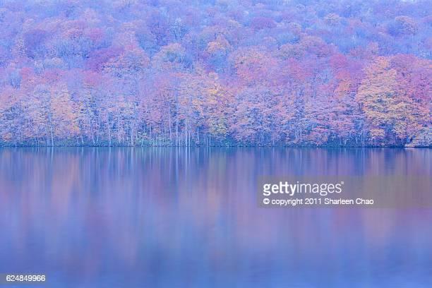 tsutanuma swamp in autumn - aomori prefecture stock pictures, royalty-free photos & images