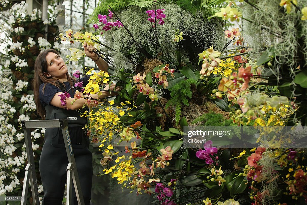 Kew Gardens Escape The Winter Blues And Launch Their Trpoical Extravaganza : News Photo