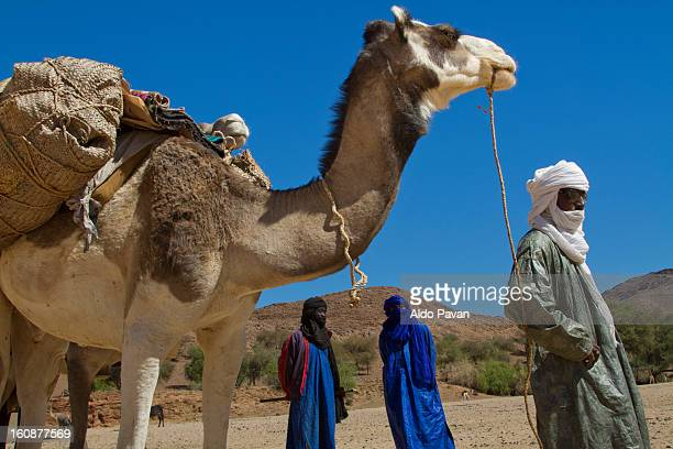 Tuareg and camel