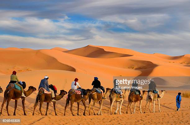 Tuareg Berber man leading a group of tourists on camels through the Erg Chebbi desert in Morocco.