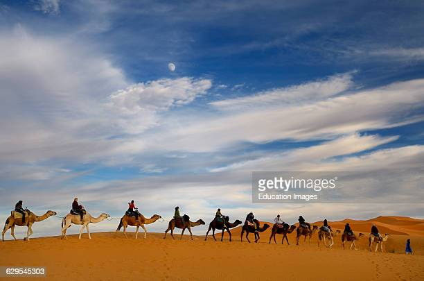 Tuareg blue Berber man leading a group of camel riders to the Erg Chebbi desert in Morocco with moon