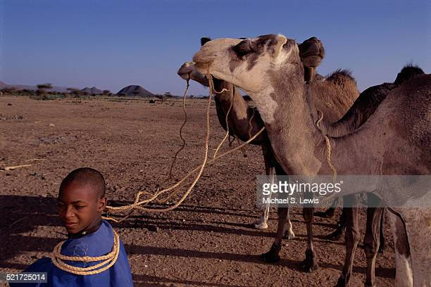 Tuareg Boy Sitting with Camels