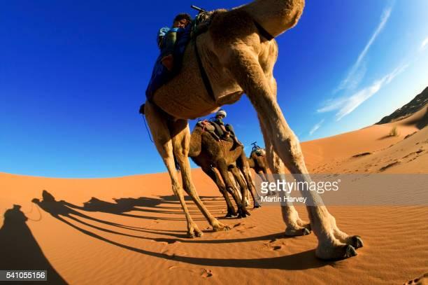 Tuareg Boys on Camels