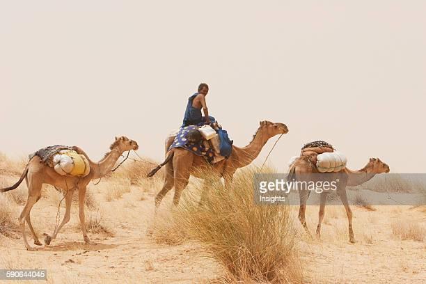 Tuareg camel caravan near Timbuktu, Mali.