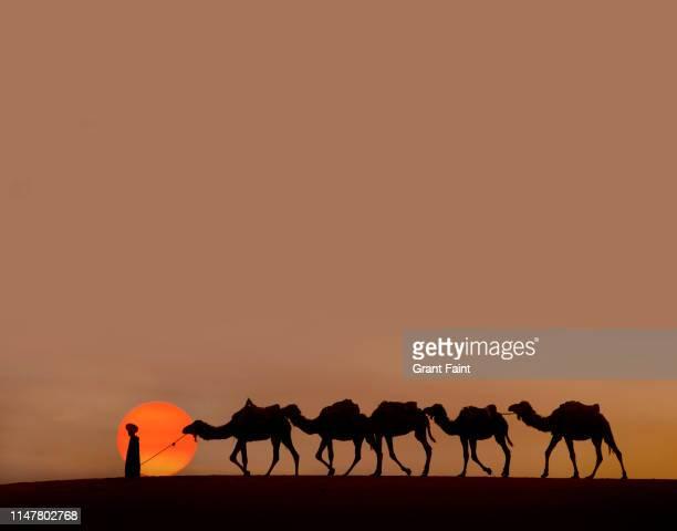 tuareg camel guide at sahara desert - touareg photos et images de collection
