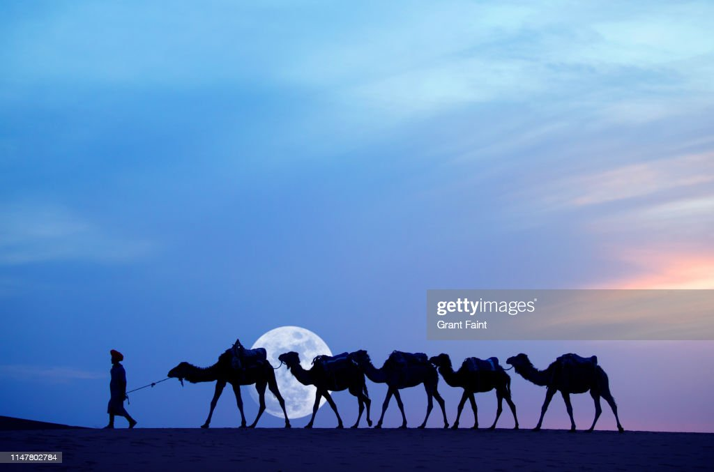 Tuareg camel guide at Sahara desert : Stock Photo