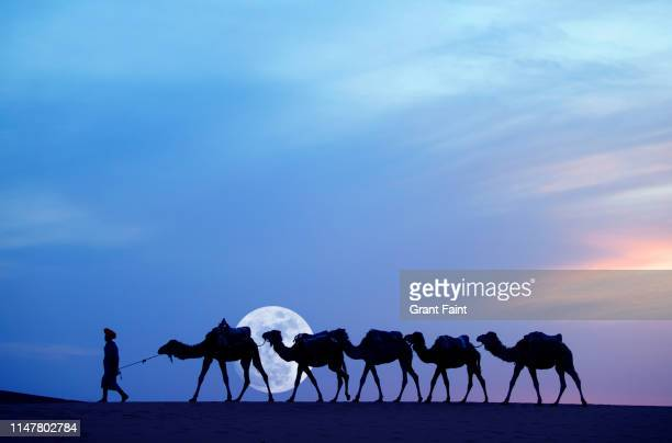 tuareg camel guide at sahara desert - nomadic people stock pictures, royalty-free photos & images