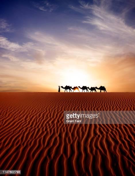 tuareg camel guide at sahara desert - モロッコ ストックフォトと画像
