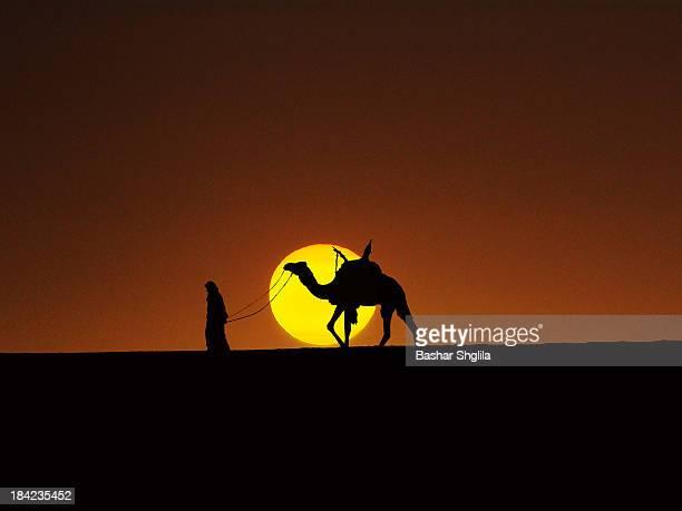 Tuareg, camel & sun