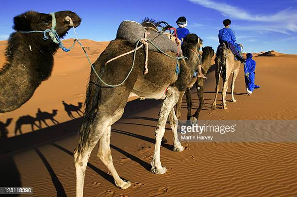 Tuareg man and his children, dressed in traditional blue robe, with camels in the Erg Chebbi area. Sahara desert. Morocco