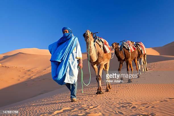 tuareg man & camels, erg chebbi, sahara desert - tuareg tribe stock pictures, royalty-free photos & images