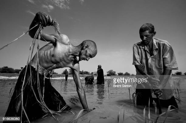 DAG ALLAL TIMBUKTU MALI SEPTEMBER 2009 Tuareg men plant grass in the banks of the Niger River to grow a forage crop for their animals and for sale in...
