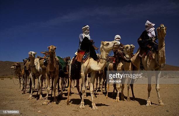 Tuareg nomads taking their One-humped camels to the weekly city market. Tamanrasset, Ahaggar Mountains, Sahara Desert, Algeria.