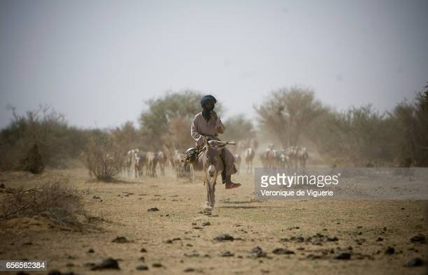 Tuareg nomads travel to the waterhole to drink wash but especially to enable their herds to drink They are nomadic pastoralists