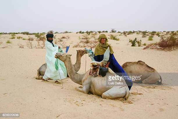 tuaregs and camels - dafos stock photos and pictures