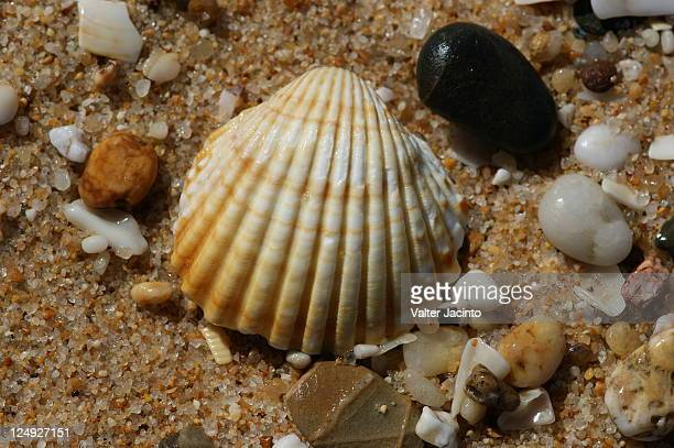 cockles pictures cockle stock photos and pictures getty images 7109