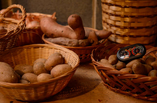 """Tubers in a root cellar with a temperature and humidity gauge.Philip Wert of West Reading practices a number of """"green"""" activities throughout his..."""