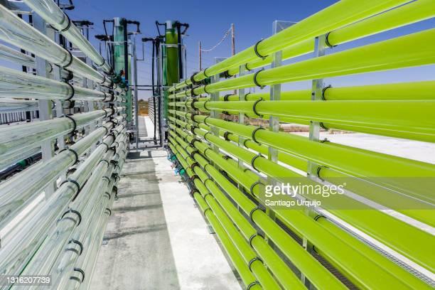 tubular bioreactors filled with green algae fixing co2 - green algae ストックフォトと画像