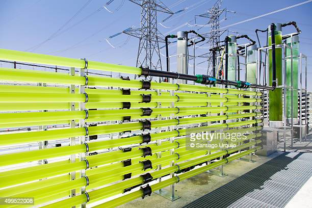 Tubular bioreactors filled with green algae fixing CO2