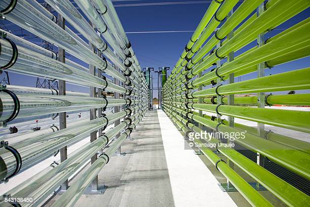 tubular bioreactors filled with green algae fixing co2 - photosynthesis stock photos and pictures