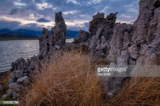 Tufa and Tumbleweed in South Mono Lake