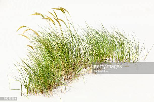 Tuft de hierba en arenas blancas