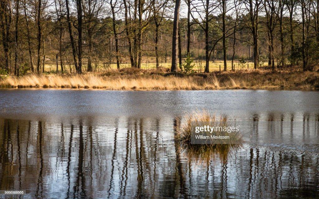 Tuft Of Grass Reflection : Stockfoto