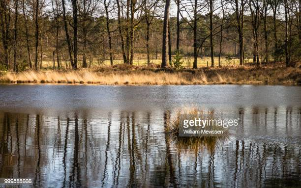 tuft of grass reflection - william mevissen stock pictures, royalty-free photos & images