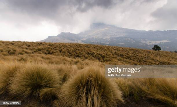 Tufts of Alpine grass along the hiking trail Iztaccihuatl-Popocatepetl National Park