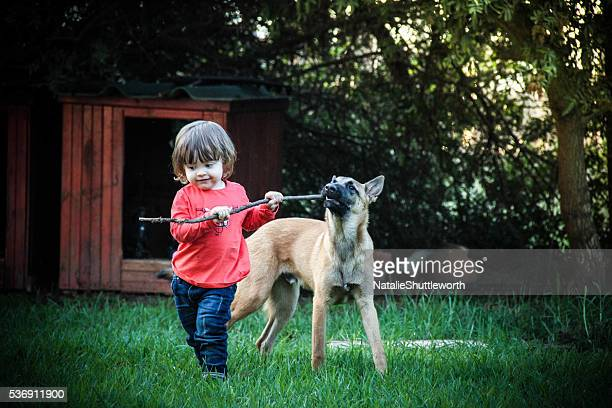 tug of war play mates - dogs tug of war stock pictures, royalty-free photos & images