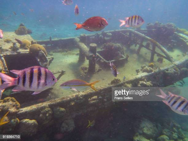 tugboat wreck, snorkeling and diving location on curacao - frans sellies stockfoto's en -beelden