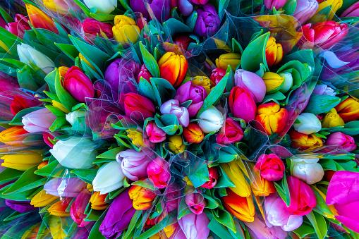 Tulip bouquet 1089152736