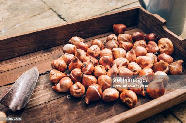 tulip bulbs in wooden box, bulbs to be planted during autumn, home gardening as digital detox - autumn stock pictures, royalty-free photos & images