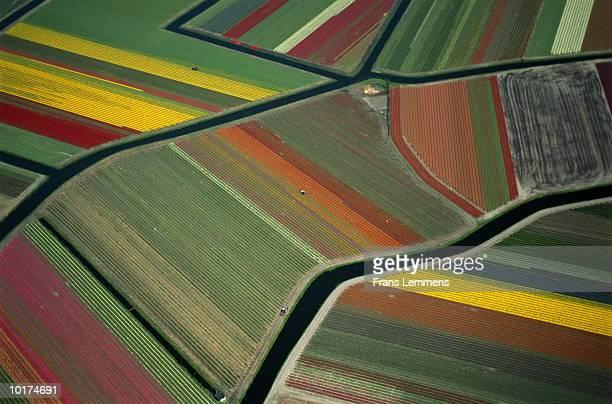 Tulip fields, aerial view