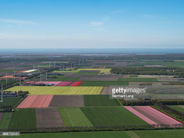 Tulip fields in the Netherlands, aerial view