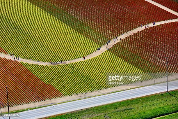 tulip fields. - ワシントン州 ストックフォトと画像