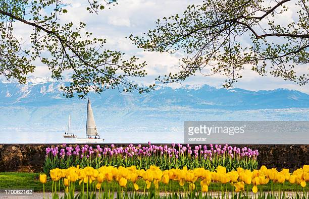 tulip garden in front of lac leman - lausanne stock pictures, royalty-free photos & images
