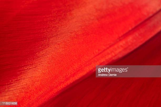 tulip - andrew dernie stock pictures, royalty-free photos & images