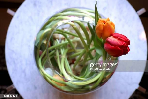 Tulip stems are swirled inside a spherical vase as part of the Dutch Ambassador's residence during the Tulip Days celebration March 28, 2019 in...