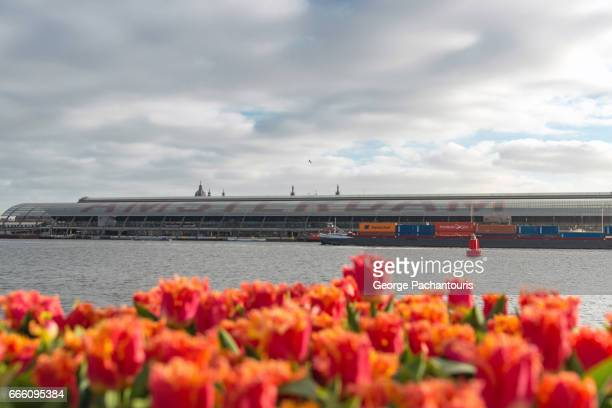 Tulips across Amsterdam Central station.