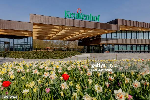 Tulips are in full bloom at the Keukenhof the world's largest flower and tulip garden on April 8 2020 in Lisse Netherlands Due to coronavirus the...