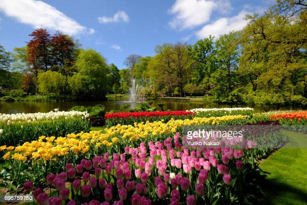 Tulips are in full bloom at the Keukenhof the world's largest flower and tulip garden park on May 10 2017 in Lisse Netherlands One of the most...