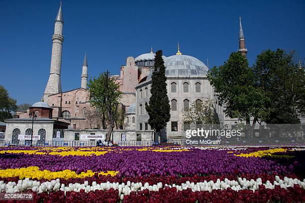 Tulips are seen in front of the Hagia Sofia in the Sultanahmet district on April 13 2016 in Istanbul Turkey Every April Istanbul celebrates the...
