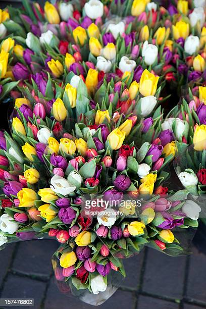 Tulips at Flower Market in Amsterdam
