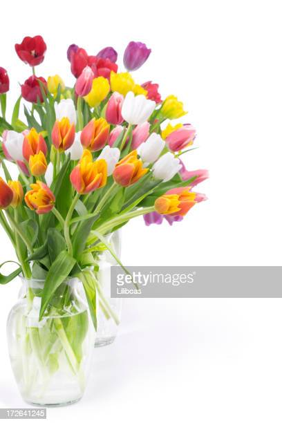 Tulips Bouquet (XL)