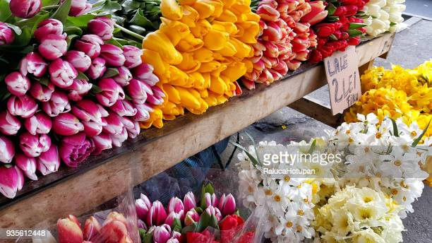 tulips bouquets in a tulip market