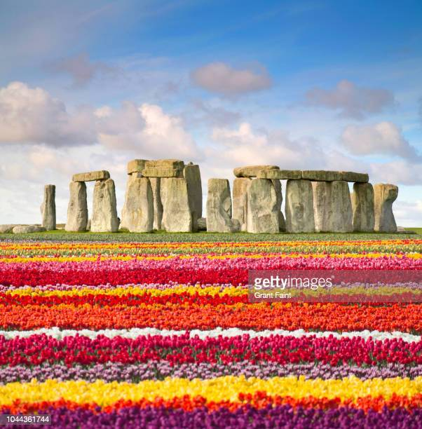 tulips by famous place: stonehenge - stonehenge stock pictures, royalty-free photos & images