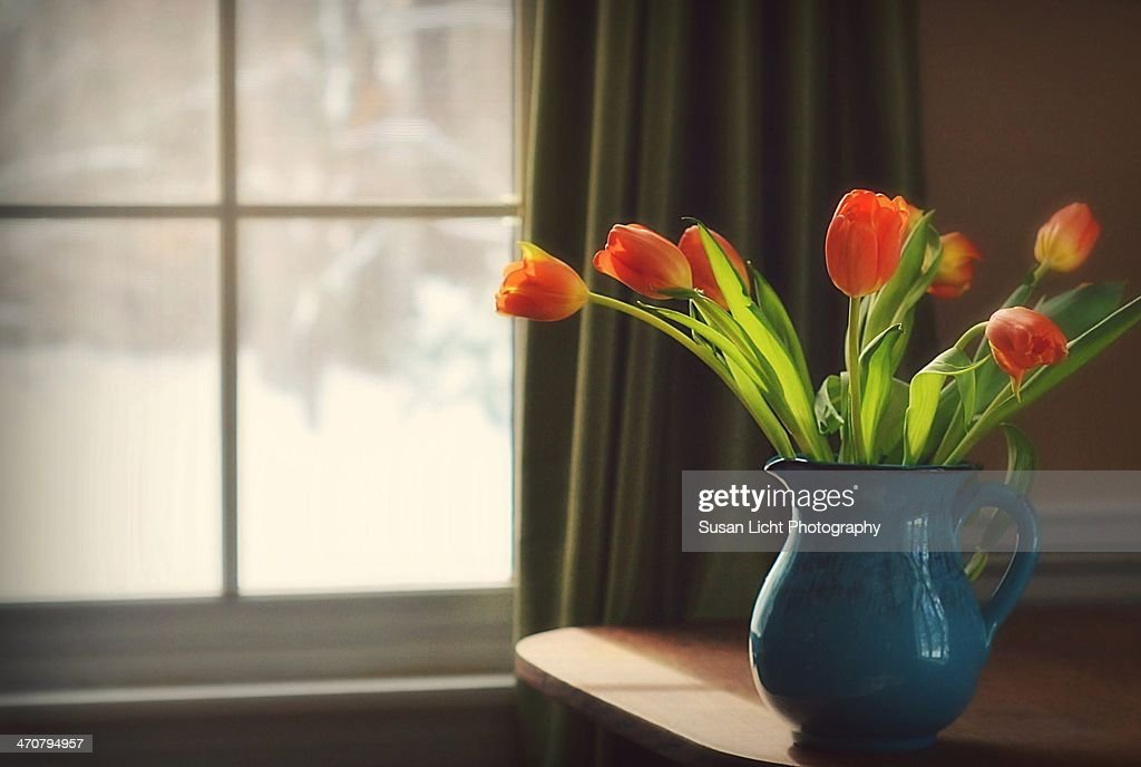 Tulips by the Window : Stock Photo
