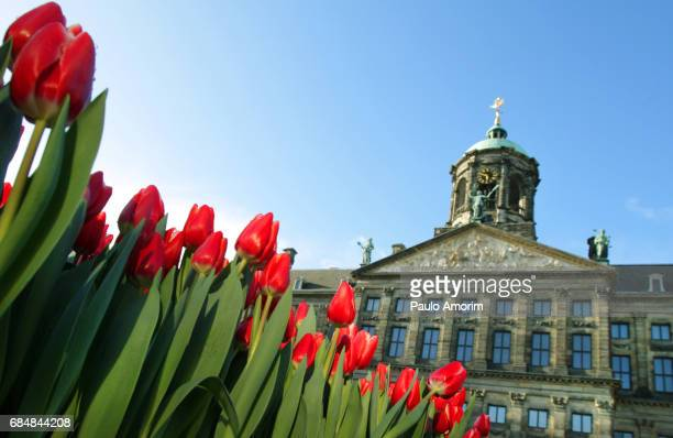 Tulips Flowers at Dam Square in Amsterdam