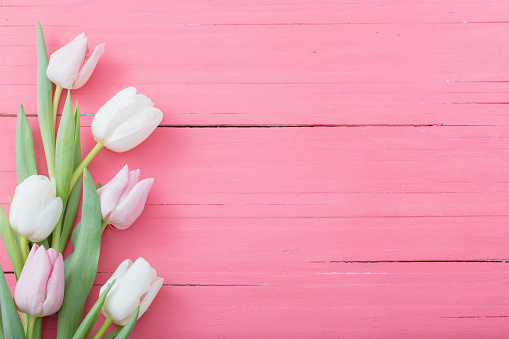 tulips flowers on pink wooden background 1137337430